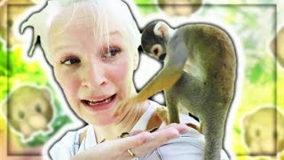 we-found-wild-monkey-s-in-florida
