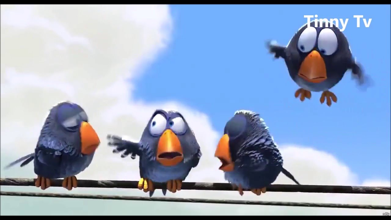 Funny Birds Animated Short Film Tinny Tv Entertaiment