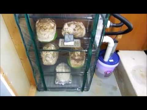 Making my fruiting chamber build DIY project
