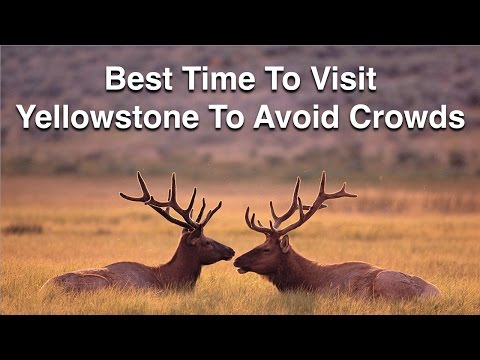Best Time To Visit Yellowstone To Avoid Crowds