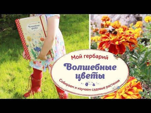 МОЙ ГЕРБАРИЙ. Волшебные цветы