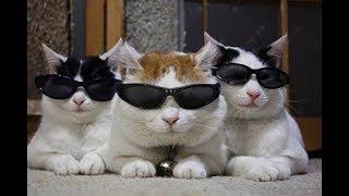 Смешные коты, кошки и другие животные (funny cats 2019) – НЕЛЬЗЯ УНЫВАТЬ, ЖГУЧИЕ КОТЕНКИ