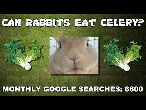 Can Rabbits Eat Celery? Rabbit Food Answers