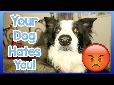 does-your-dog-hate-you?-5-top-tips-to-find-out-if-your-doesn't-love-you!