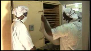 Www.africareport.com Video - Balimaya Fruit, Mali