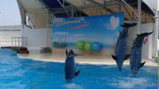 Коктебель. Дельфинарий. 2016 год.