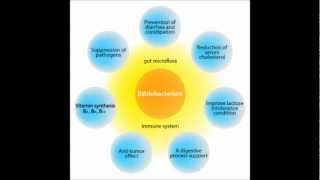 Benefits Of Bifidobacterium Probiotic Supplements - Why You Need Them?