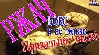 Сборник приколов котята играют. смешное видео.