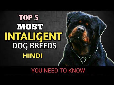 Most intelligent dog breeds || top 5 most smartest dog breeds of the world || PET4YOU