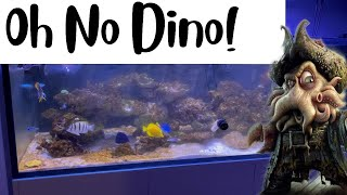 180g Reef Tank - Dinoflagellates / 80W UV