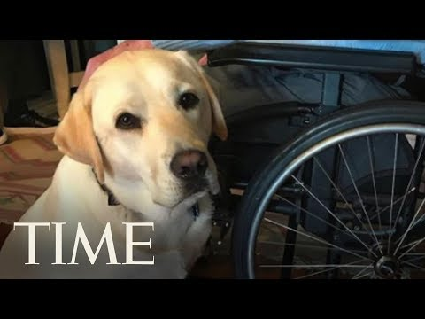 Former President George H.W. Bush Gets A Service Dog Named Sully | TIME