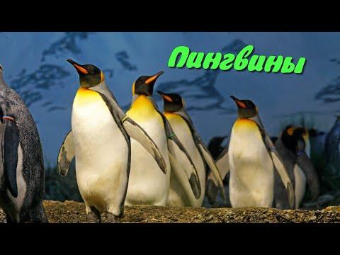 Детям про пингвинов