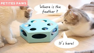 Rotating Feather Cat Toy Review - Does It Work?
