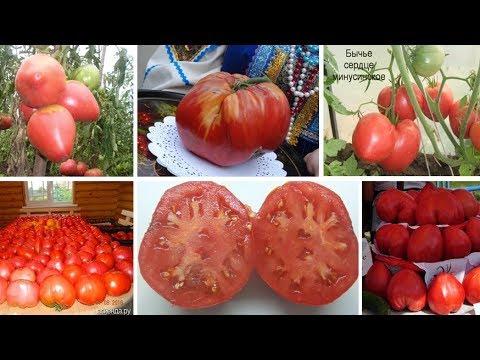 Лучшее. Необычное. Эксклюзивное. Знаменитые Минусинские томаты.   минусинский   минусинские   помидоры   кистевое   стаканы   розовые   розовое   помидор   стакан   сердце