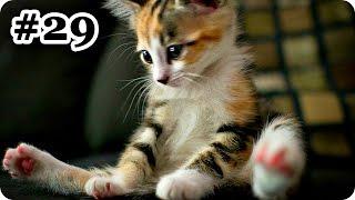 Смешные Кошки 2017! (#29) Веселая Видео Подборка! Funny cats 2017/ Кошачьи Приколы /