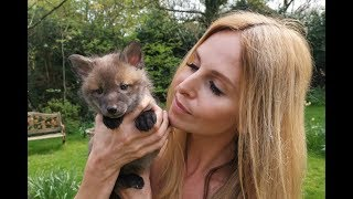 BABY FOXES   HOW TO RESCUE THEM