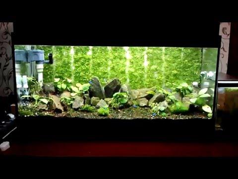 Коряги в аквариум своими руками и эксперимент с корягой с корой. Часть 1