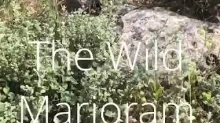 A walk in the Galilee spring 2020