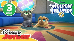 Welpen Freunde - Clip: Mission Hawaii | Disney Junior 🐶