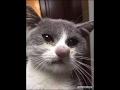 Коты говорят Hello Ругаются по русски mp3