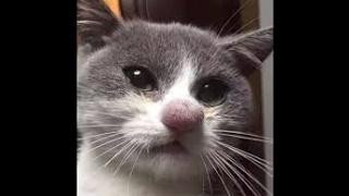 """Коты говорят """" Hello"""" ! Ругаются по-русски  !)"""