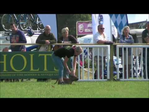 Game Fair 2017 - Terrier racing main ring