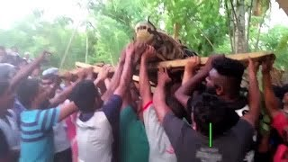Пятиметровый крокодил вызвал переполох на Шри Ланке
