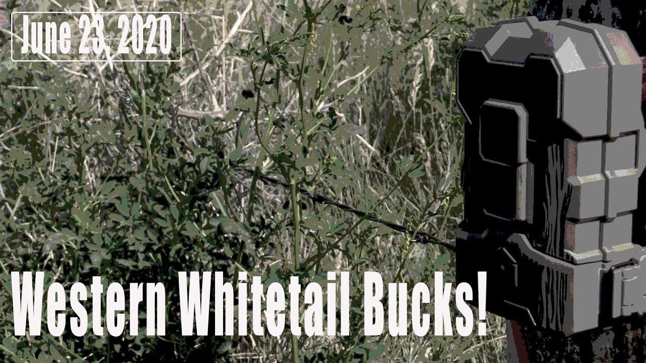 Western Nebraska Whitetail Bucks: Finding Buck Bedding Areas