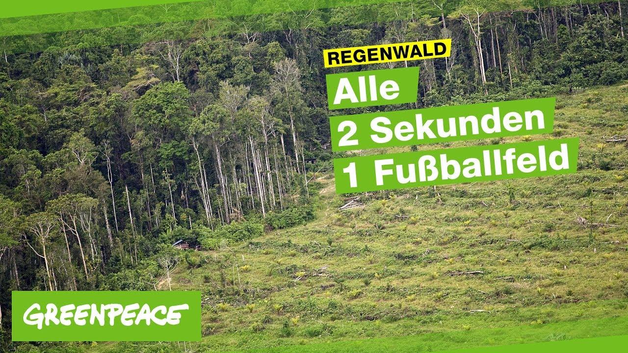 Waldzerstorung 2 700 Fussballfelder In 90 Minuten