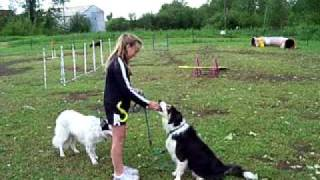 Children & Dogs - Living, Training & Playing