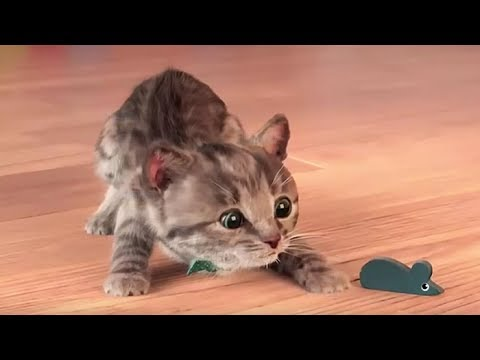 Little Kitten My Favorite Cat - Play Fun Animal Educational Game for Kids