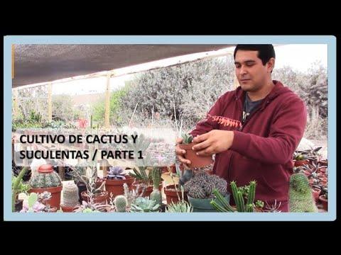 Cultivo de Cactus y Plantas suculentas. Parte 1