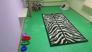 Отель для кошек «КотоЛюкс». Передержка котов в Хозяине. Отдельная просторная комната для питомца