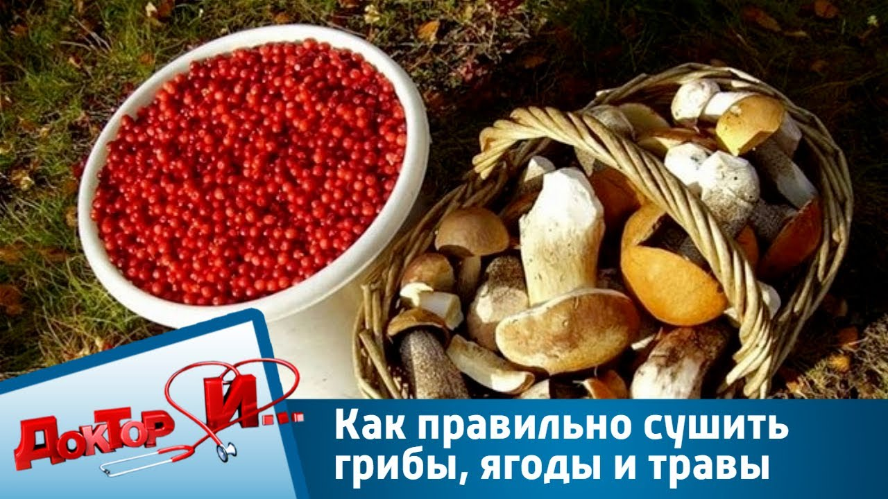 Как правильно сушить грибы, ягоды и травы | Доктор И - YouTube