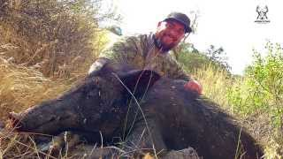 RESERVOIR HOGS - Public Land Wild Pig Hunt CA