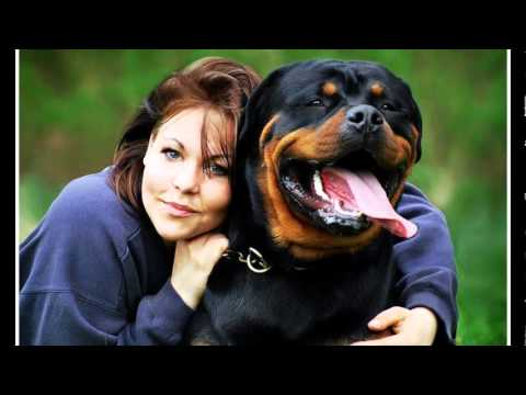 Rottweiler 'The Best Dog'