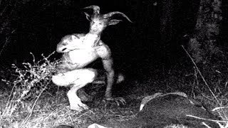 Bizarre Nocturnal Cryptids