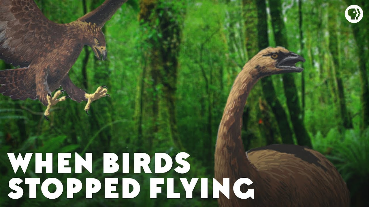 when-birds-stopped-flying