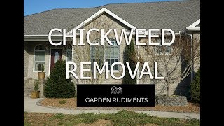 Chickweed Removal