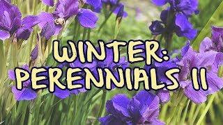 Winter: Perennials II