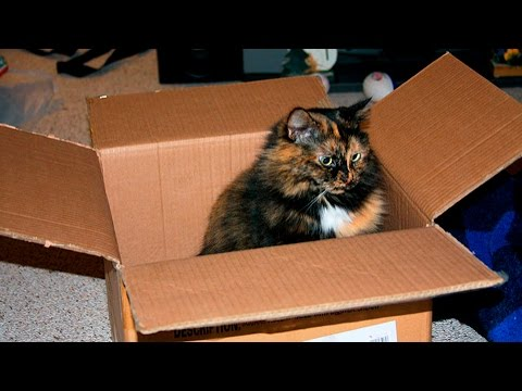 Cats & Boxes #22