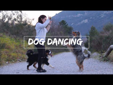 SEANCE DE DOG DANCING ♡