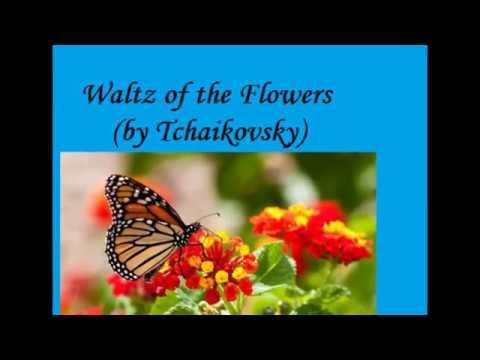 Valsa das Flores de Tchaikovsky