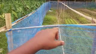 বাড়ির আঙ্গিনায় ১ শতাংশ জমিতে সকল সবজির আদর্শ মডেল  vegetable farming  কালিকা কাপুর মডেল