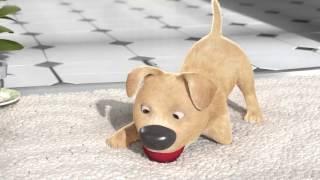 Подарок: мультик о трехногой собаке