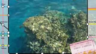 Sharm El Sheikh (la barriera corallina)
