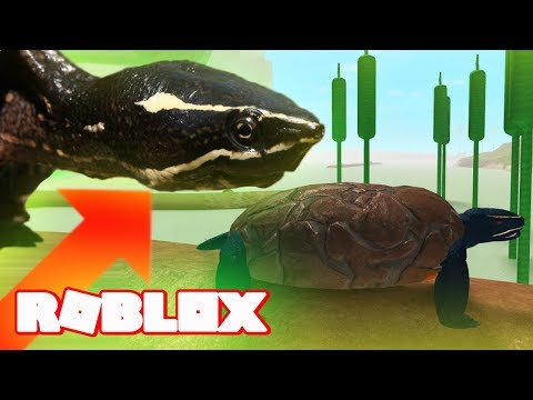 HOW TO BE A TURTLE IN ROBLOX! PEACEFUL STREAM Family Friendly Gaming Realism Survival Lets Play