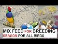 Mix seed for Budgies breeding season - combination of 7 seeds mix feed