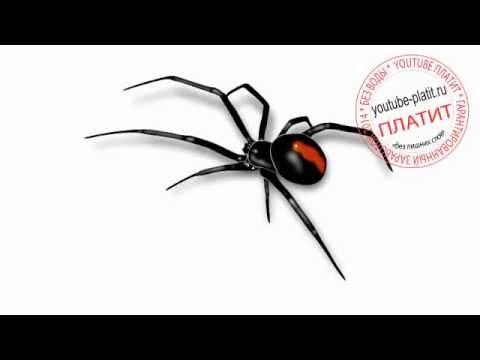 Как нарисовать ядовитого паука поэтапно карандашом