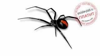 Как нарисовать ядовитого паука поэтапно карандашом(Как нарисовать паука поэтапно карандашом за короткий промежуток времени. Видео рассказывает о том, как..., 2014-06-29T07:53:40.000Z)